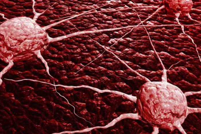 Используют ли бледную поганку в онкологии