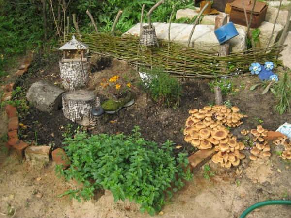 Выращивание летних опят на дачном участке