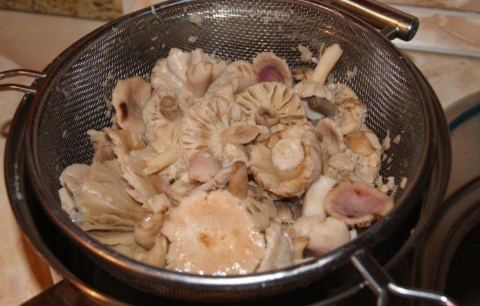 Сколько варить грибы сыроежки до готовности