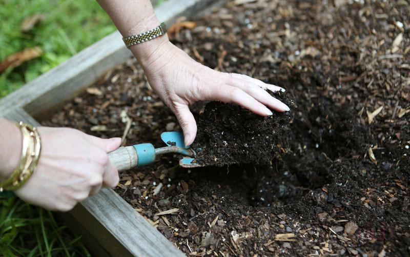 Подготовка почвы к посадке грибов