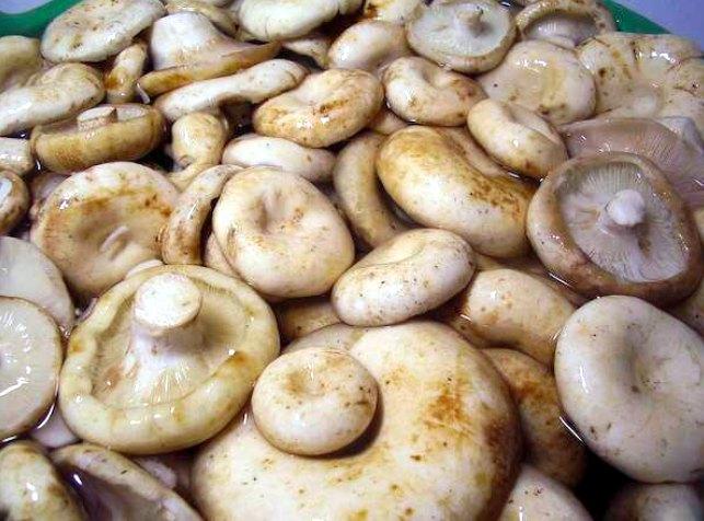 Маринованные белые грузди – 9 рецептов старых грибников