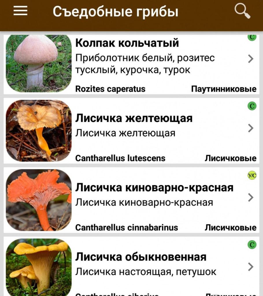 Приложение грибы