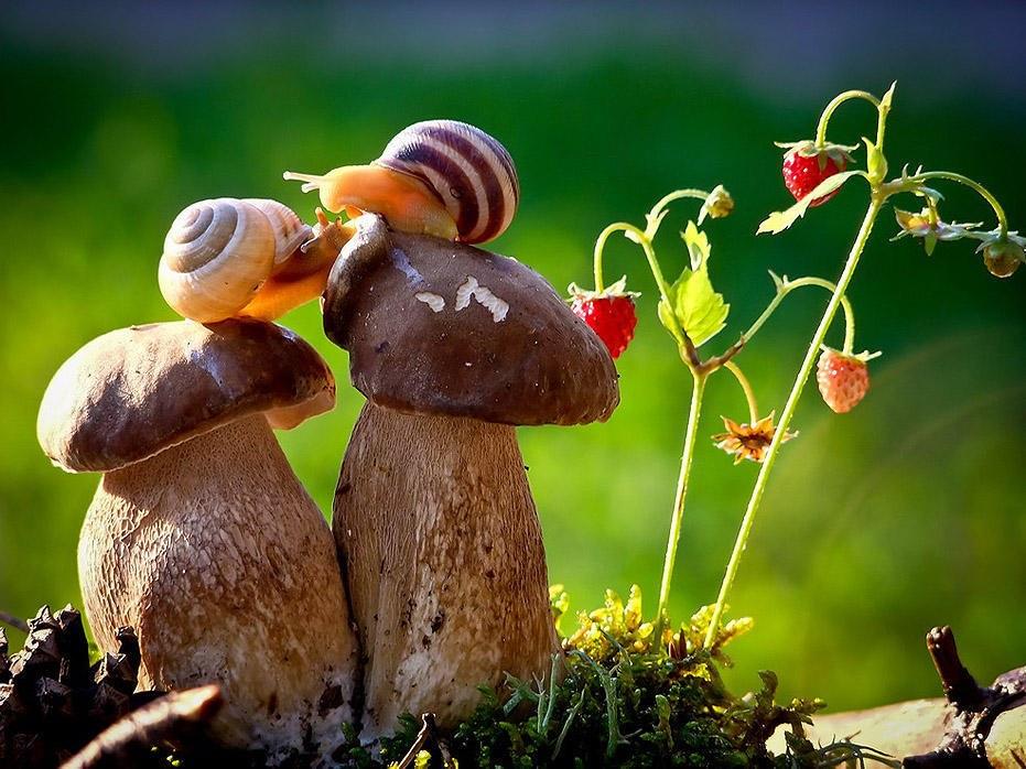 Определить гриб по фото